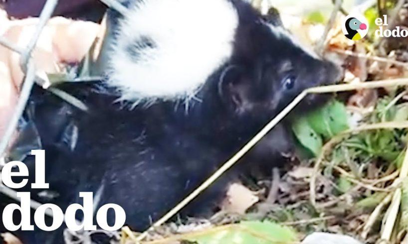 Rescatan a un zorrino atascado en una reja