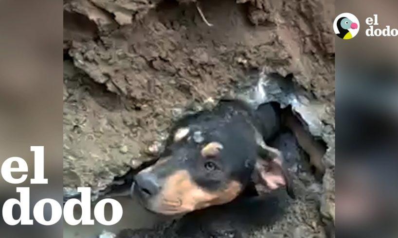Rescatistas hacen todo lo posible para salvar a un perro atrapado en una tubería