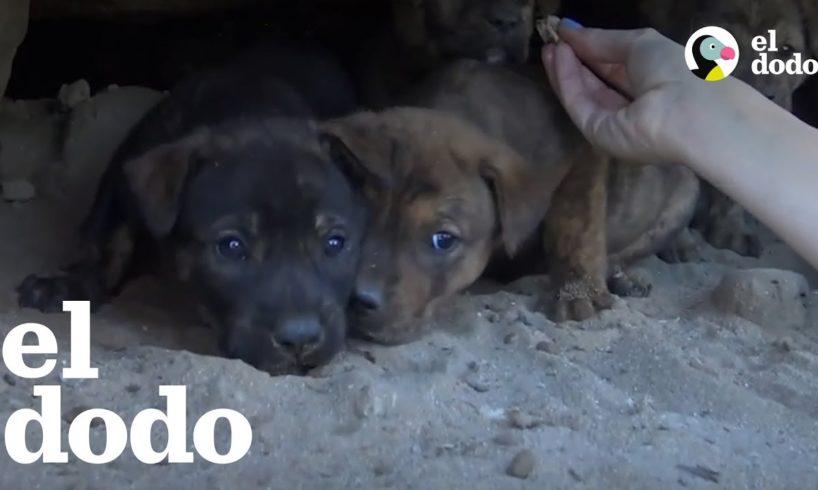 Rescatistas se meten en una cueva para salvar a cachorros que estaban atrapados