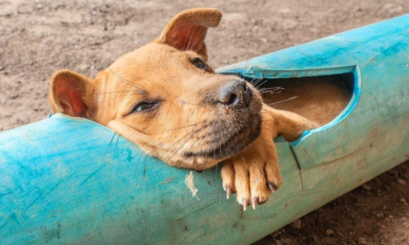Rescue little dog stuck in plastic pipe and give dog food