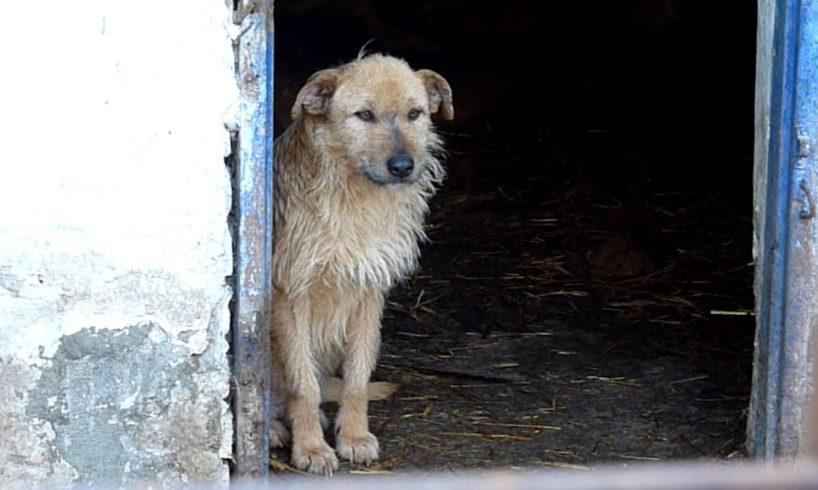 Rescue of a Sad Dog Who Forgot To Live