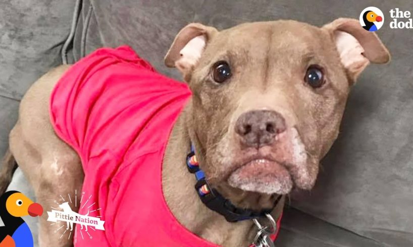 Rescued Pit Bull Has Amazing Special Ability - ALADDIN | The Dodo Pittie Nation