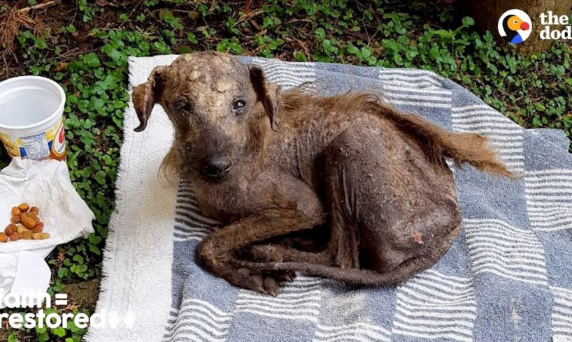 Rescued Street Dog Is Unrecognizable Now | The Dodo Faith = Restored