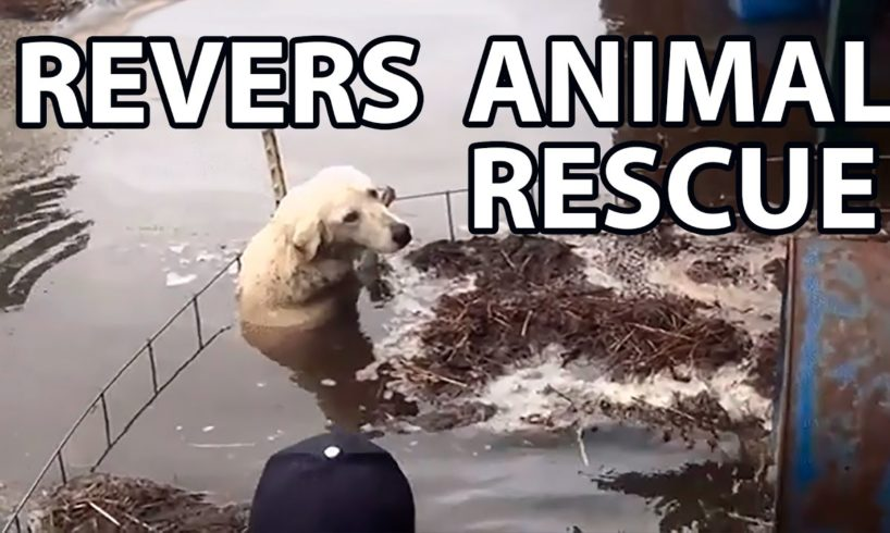 Reverse animal rescue compilation
