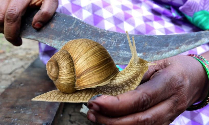 SNAIL RECIPE || How To Cook Snails || Snail Recipe by villagers| Country foods