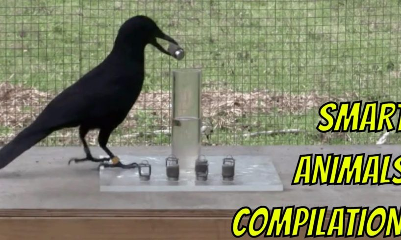 Smart Animals Compilation
