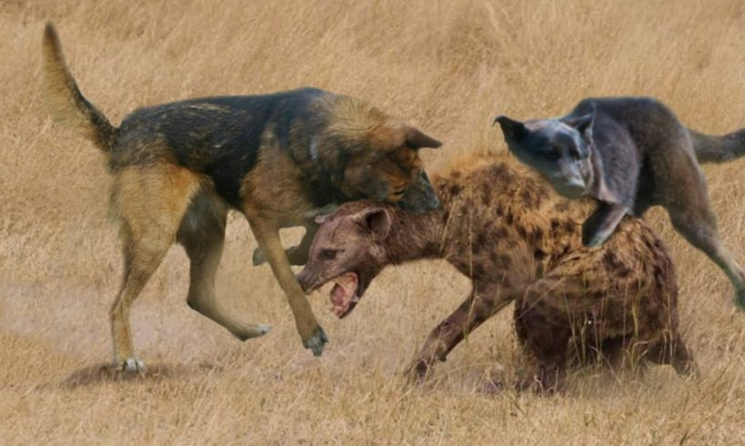 THE 10 AGGRESSIVE ANIMAL FIGHTS