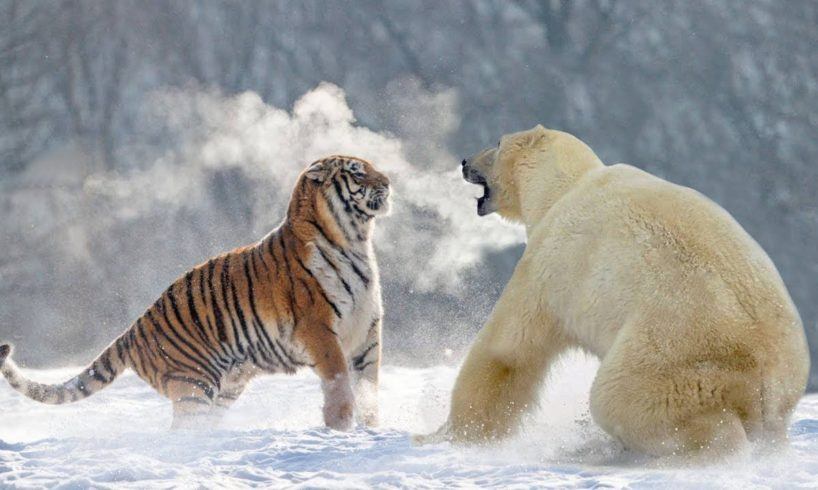 THE 10 EXTREME ANIMALS FIGHTS