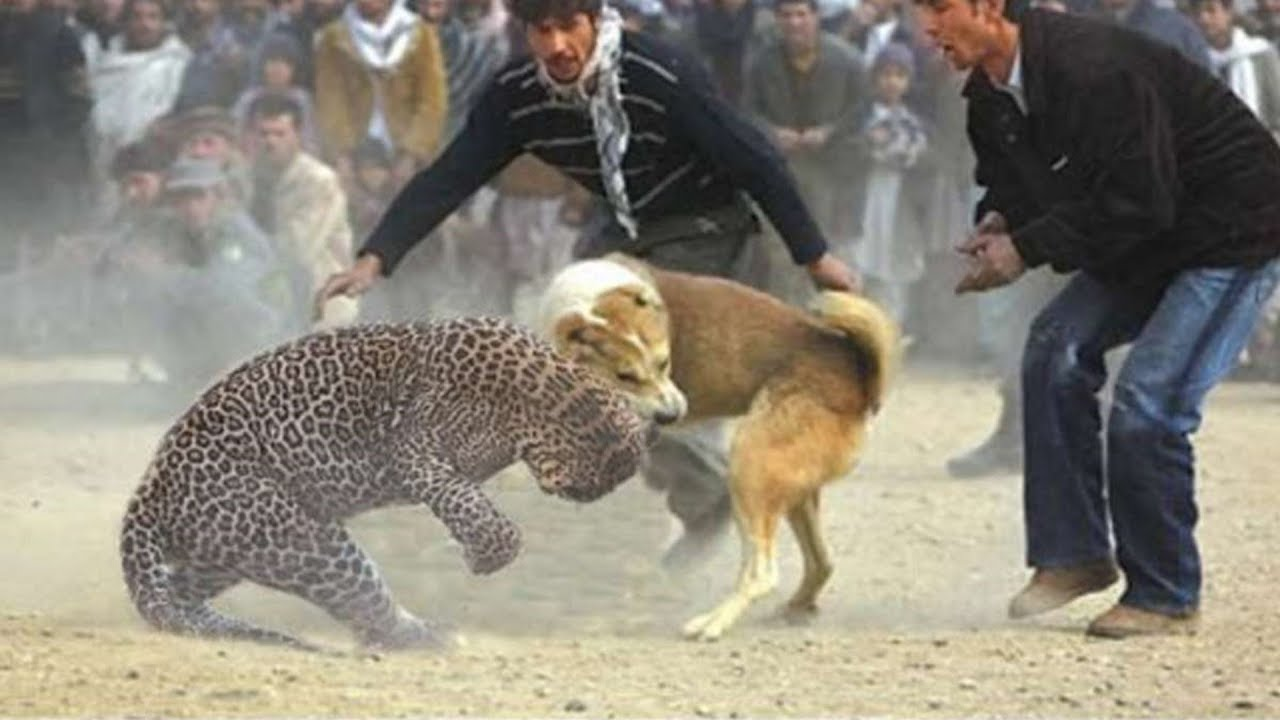 THE 10 EXTREME CRAZY ANIMAL FIGHTS
