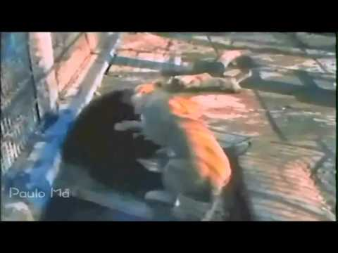 The Best Animal Fights 2
