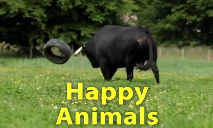 The Happiest Video You'll See All Day - Happy Animals Play, Run and Jump