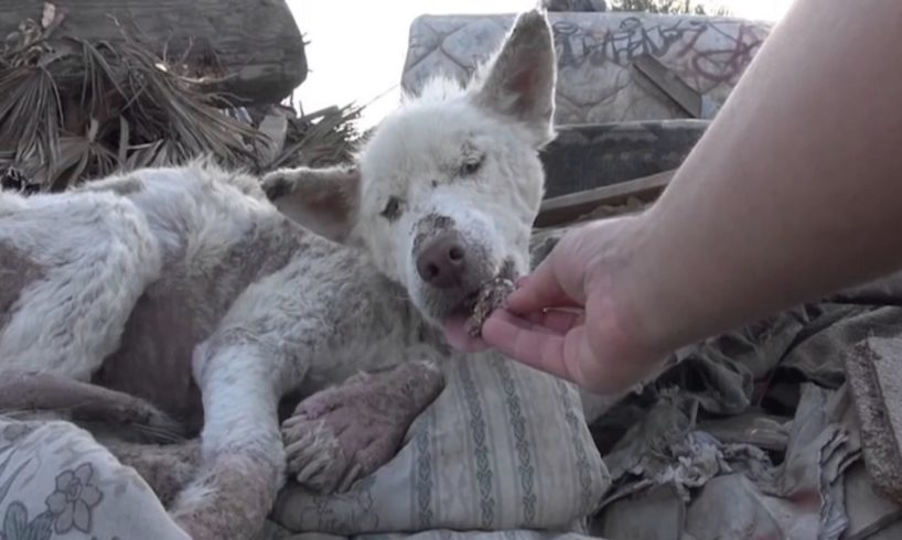 These 10 dramatic animal rescues will melt your heart