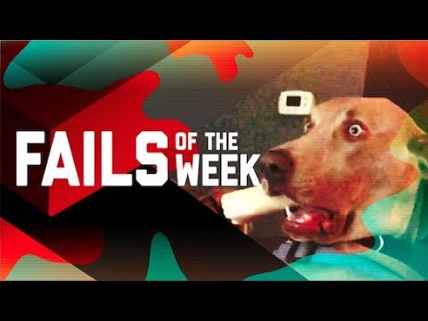 This Dog is Trippin: Fails of the Week (October 2018) | FailArmy