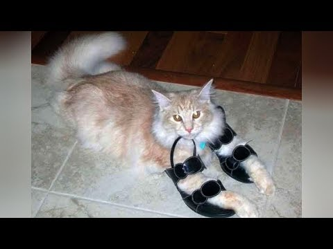 This videos is the KEY TO LAUGHING SUPER HARD - Funny ANIMALS PLAYING & BATTLING WITH SHOES videos