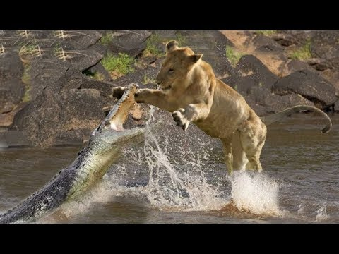 Top 10 Craziest animal fights caught on camera! Wild animal attacks