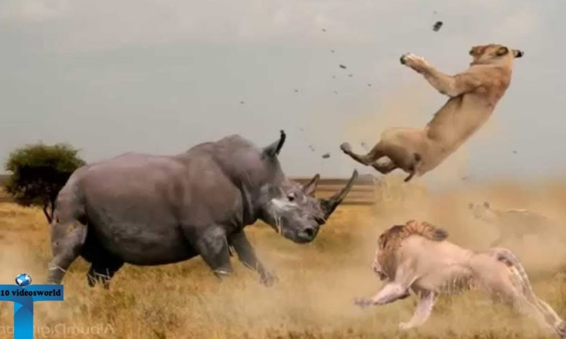 Top 10 Extreme Real Animal Fights Caught On Tape - When Animal Behavior Changed