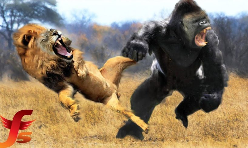 Top 7 Real Extreme Craziest Animals Fights Caught On Tape