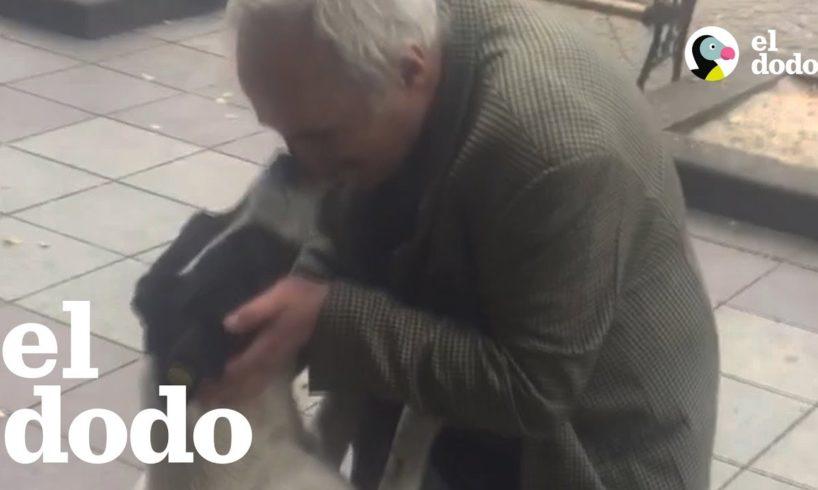 Un reencuentro tres años después de que este perro se había perdido
