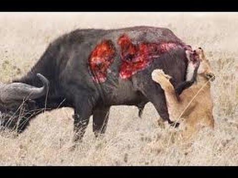 Wild Animal Attack | Dog vs Crocodile | zebra attacked by crocodile | Lion vs Cheetah | Part -2