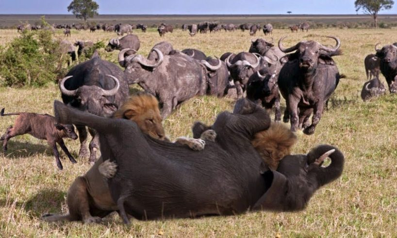 Wild Animal Fights 2019 - Buffalo vs Lion vs Elephant, Leopard vs Impala, Warthog...