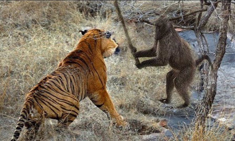 Wild animal fights - Crocodile vs lion,hippo,elephants, snake vs snake, tiger vs monkey...