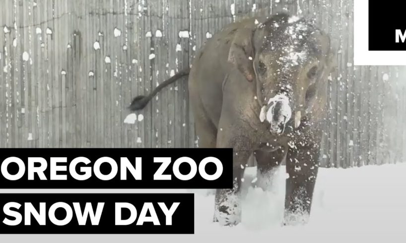 Zoo animals playing in the snow