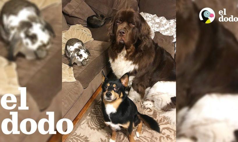 ¿Perro y conejo... mejores amigos? 😂 | El Dodo