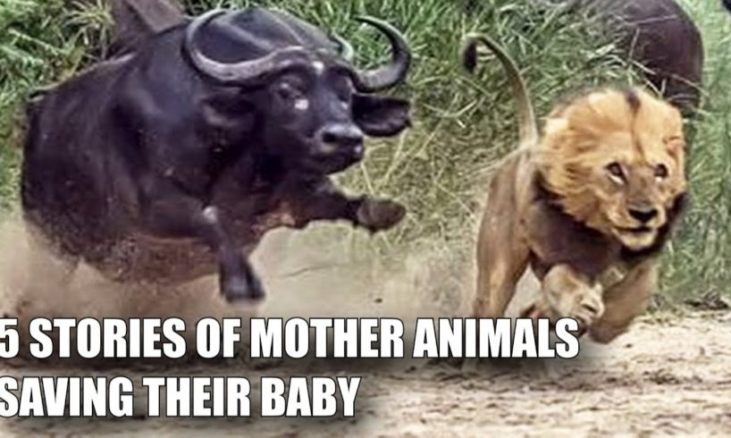 5 MOTHER ANIMALS THAT HEROICALLY RESCUED THEIR BABIES
