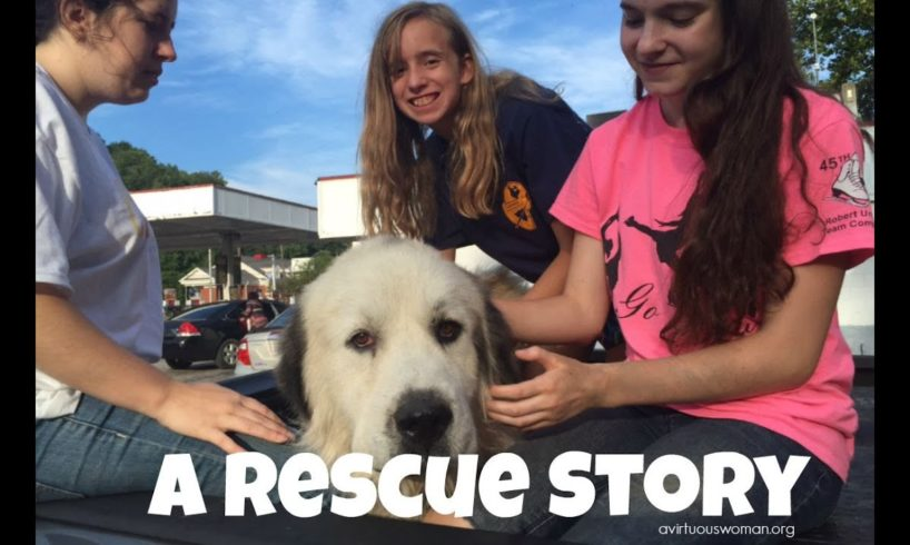A Dog Rescue Story that will make you happy!!