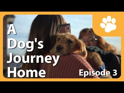 A Dog's Journey Home (E3) - Buffalo Puppies Adoption Day!