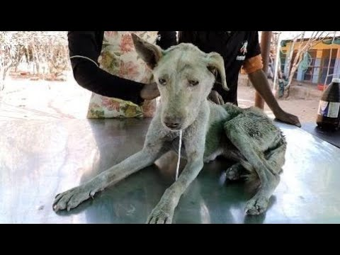 A very old, confused dog with terrible wound rescued - Animals Rescued  Ep 25