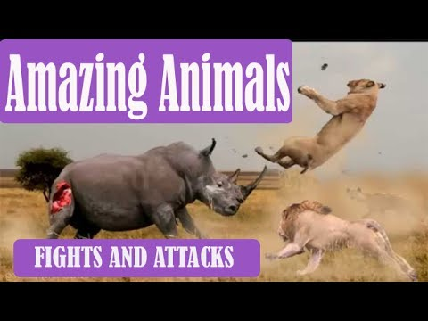 AMAZING ANIMAL FIGHTS AND CRAZY ATTACKS CAUGHT ON TAPE