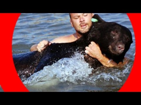 AMAZING animal rescue video! Brave man RESCUES DROWNING BEAR! The Bear LIVES!