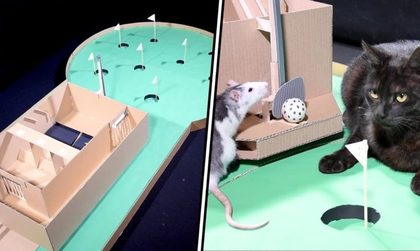 ANIMALS play MINI GOLF - Fun TOURNAMENT BETWEEN PETS and DIY TUTORIAL