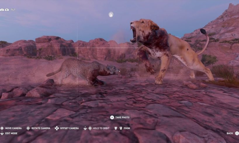 ASSASSINS CREED ORIGINS - ALL ANIMAL FIGHTS - PART 2!!!!