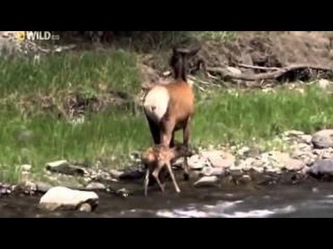 Animal Fight Night Nat Geo WILD | National Geographic HD