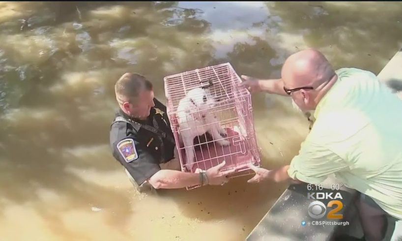 Animal Rescue Team Bringing Texas Shelter Dogs To Pittsburgh