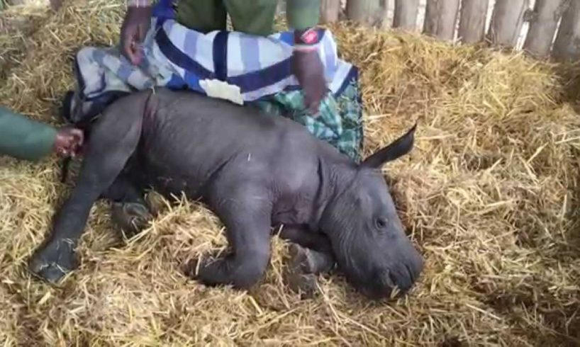Animal rescue - baby rhino abandoned by his mother