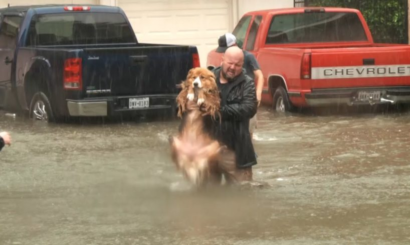 Animal rescues from Houston storm