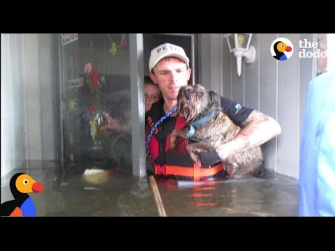 Animals Left Behind In Hurricane Harvey RESCUED by Heroes | The Dodo