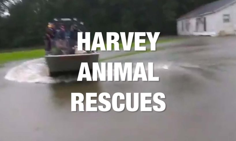 Animals Rescued During Harvey Floods