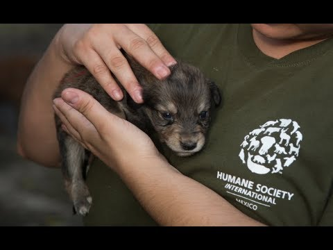 Animals rescued after the Guatemala volcano