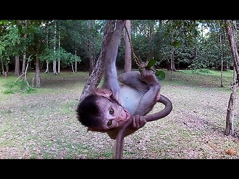 Baby monkey playing - Cute animals video