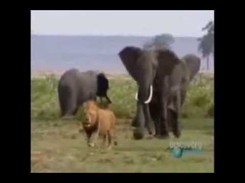Biggest Super Cool wild animal fights !! Part B