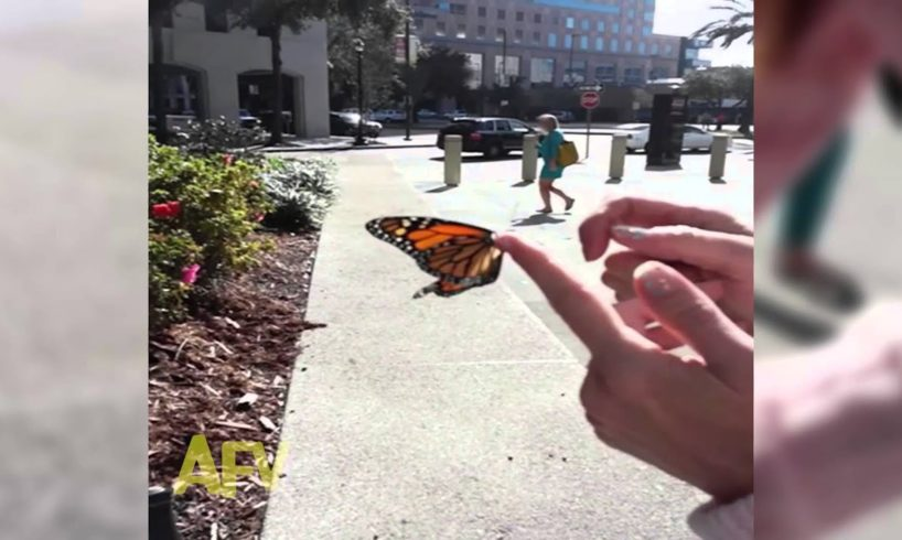 Butterfly Rescue Goes Horribly Wrong