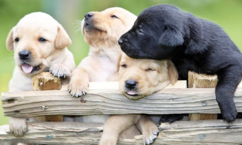 CUTE PUPPIES PLAYING (HD) [Epic Laughs]