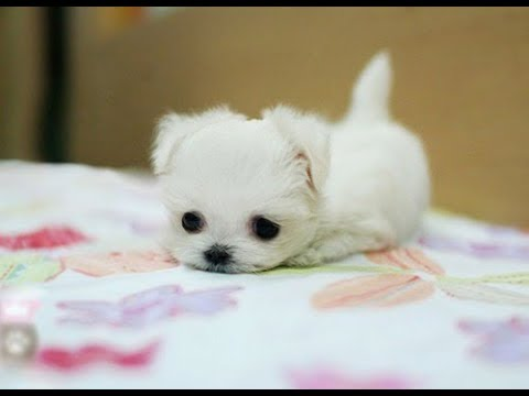 CUTEST PUPPIES IN THE WORLD | You must watch this !!