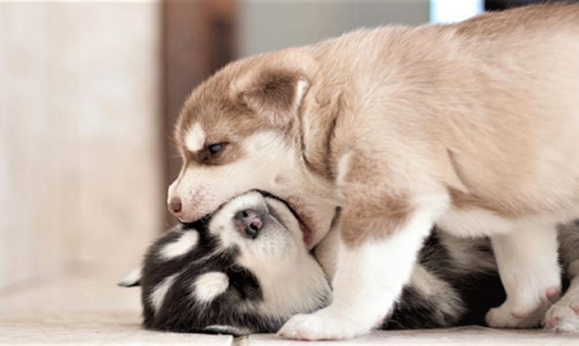 CUTEST PUPPIES & DOGS SLEEPING | Top Dog Youtube Compilation
