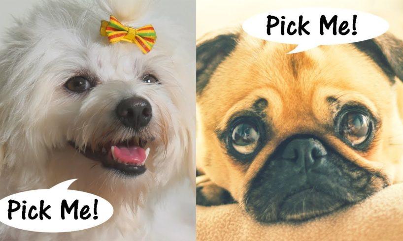 Choose Your Favorite Dog 🐶 Watch Cute Puppies - VOTE BELOW! 👇