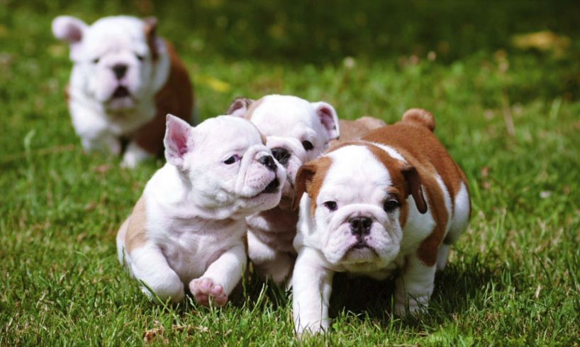 Compilation of the Cutest Puppies in the World!! (HD)